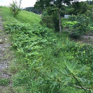 疲労困憊 農園草刈と日々の草むしり