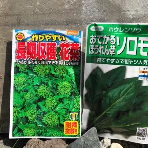 野菜高騰につき葉物野菜の種蒔き