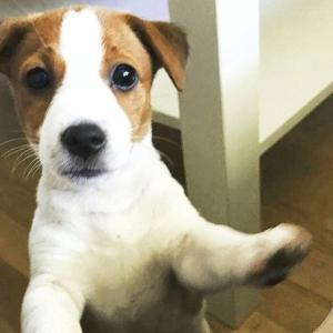 AV「時間よ止まれ!」で犬を採用した結果wwwwwww