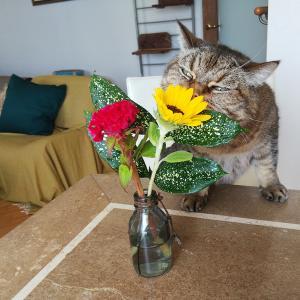 WITHコロナでWITHフラワーの生活 ブルーミーライフの定期便500円の花束に癒されています