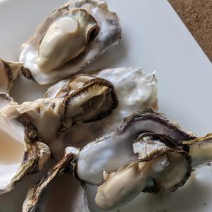 巣ごもりのプチ贅沢 東松島産 生食用の殻付き牡蠣を大人食いしました