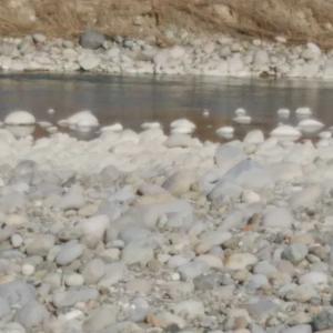 今日の渡良瀬川