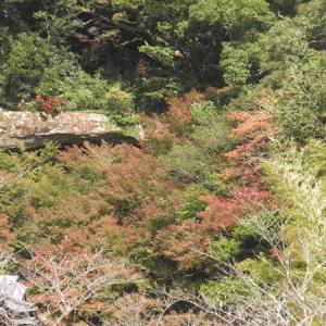御橋観音寺と龍門の紅葉