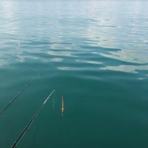ヘダイなど色々釣りました