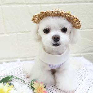 ハンドメイド犬服(o^-^o)