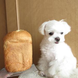 焼きたてパン♪(*´∀`)