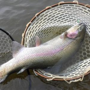 またこんなの釣りたい