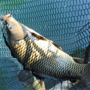 鱒を釣りに行ったハズなのですが