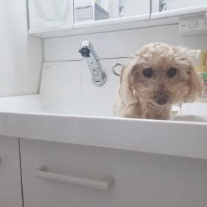 お風呂の日