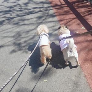 公園たっぷりお散歩デー