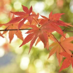 定光寺の紅葉 その1