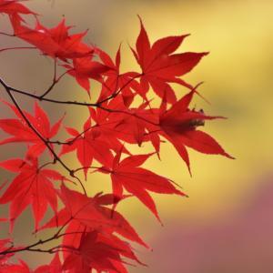 定光寺の紅葉 その2