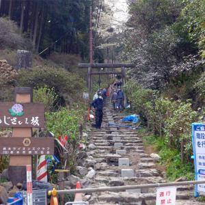 太平山の桜(2)