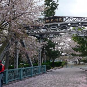 桜の時期の荒川サイクリングロード(2)森林公園へ
