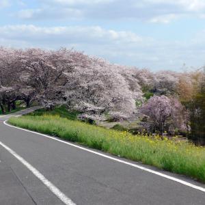 桜の時期の荒川サイクリングロード(5)さくら堤公園