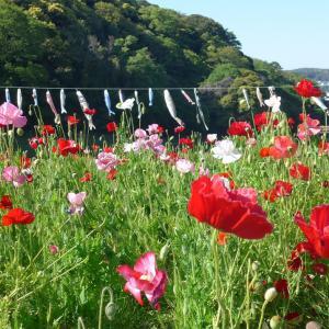 三浦半島一周④くりはま花の国