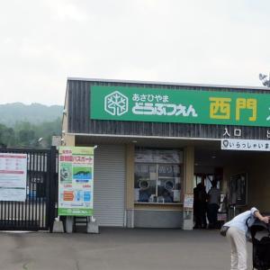 北海道編3振り返り(22)旭山動物園①