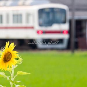 葉多の向日葵
