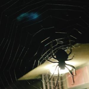 蜘蛛の巣に引っかかって、頭を石にぶつけるところでした
