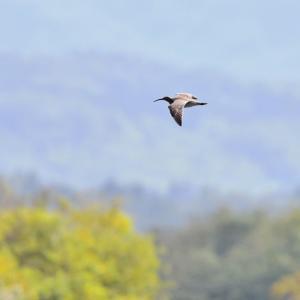 遊楽部川の鳥さんたち