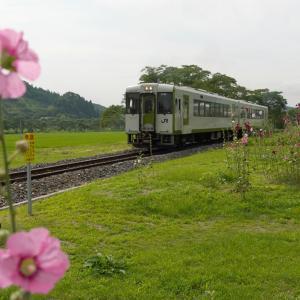 タチアオイと磐越東線