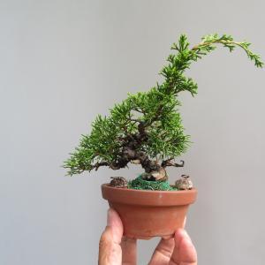 追い込みとフトコロ芽の確認