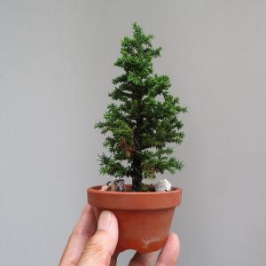 挿し木から作っています