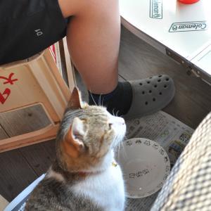 世話の焼ける猫
