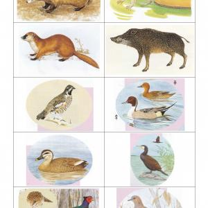 狩猟免許 実技試験の鳥獣判別
