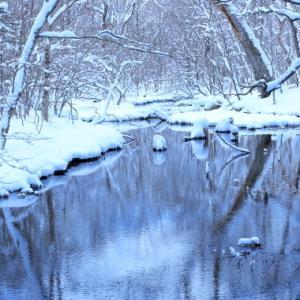 冬の北大演習林