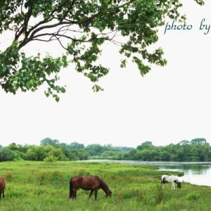 放牧馬風景