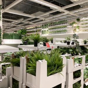 手間なく植物を飾りたい方に!IKEAの品揃え豊富なフェイクグリーンを徹底研究