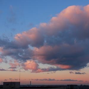 朝陽に染まるロール雲(高積雲)
