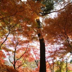 国営武蔵丘陵森林公園へ紅葉を見に