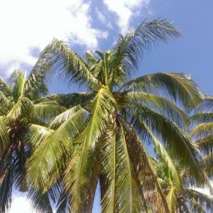 ココナッツオイルを使った28の活用法 健康・美容に役立つ意外な効果・効能