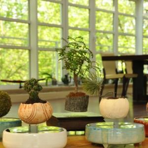 【謎】 宙に浮いている盆栽 フローティング盆栽って知ってる?