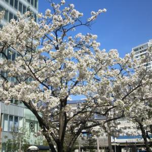 桜が咲いたことを実感した瞬間