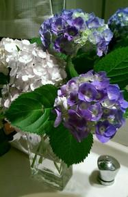 紫陽花の季節☆