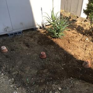 裏庭の整地・・・アジサイを植える