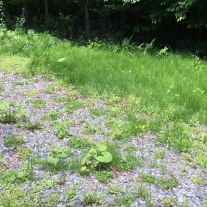 別荘地での雑草