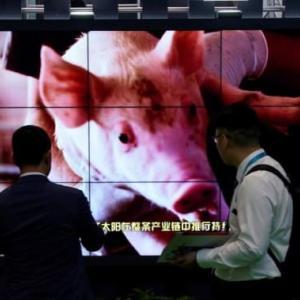 ロイター焦点:中国から感染拡大、アフリカ豚コレラが世界の脅威に