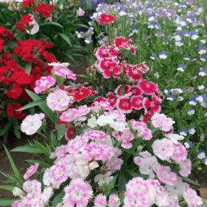 お花が満開*:.。.(*ˆ﹀ˆ*).。.:*