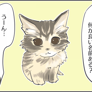 保護したフサフサ子猫の名前が決まりました