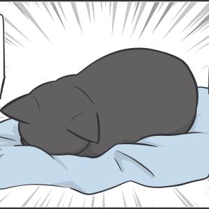 黒猫あるあるの罠