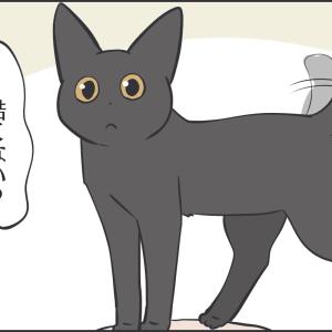 猫にとって私なんてそんなもの