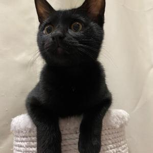 (写真)黒猫づくし