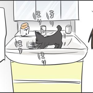洗面台のアヤちゃん/アヤちゃんの成長(昔の画像との大きさ比較)