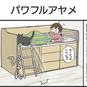 PECO更新のお知らせ/アヤちゃんの新しい遊び写真など