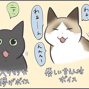 まだ子猫のアヤちゃんの鳴き声は?