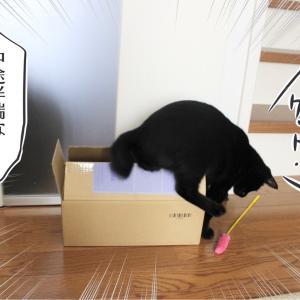 (写真)猫じゃらしを狙うアヤちゃん